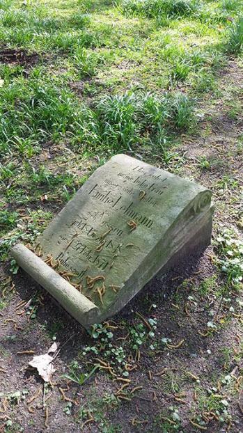 tumba muenster