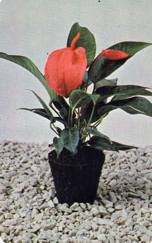 FLORASCA virágföld (Gy-S megyei Talajerdőgazdálkodási Vállalat) - 1983
