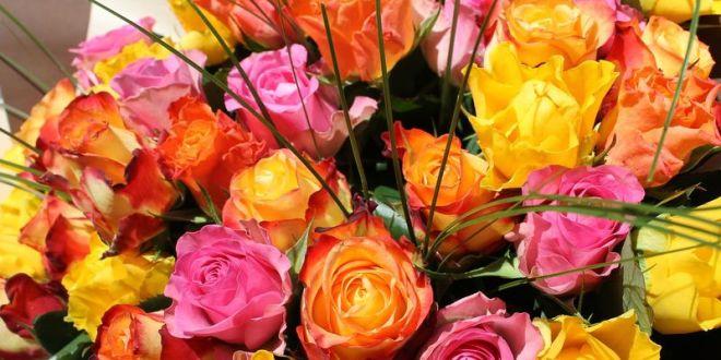 znaczenie koloru róż