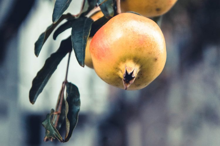 Granatapfel-Exotische-Früchte-in-Thailand-18-Sorten-die-man-probieren-muss-83a
