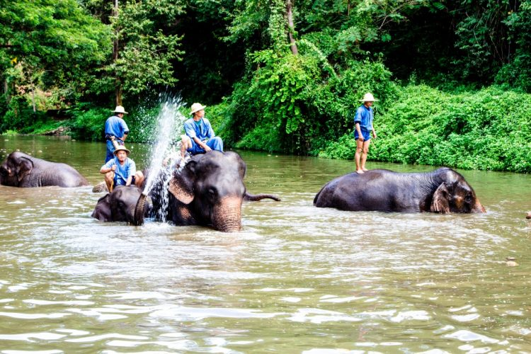 Thai-Elephant-Conservation-Center-Lampang-Elefantendorf-Thailand-14