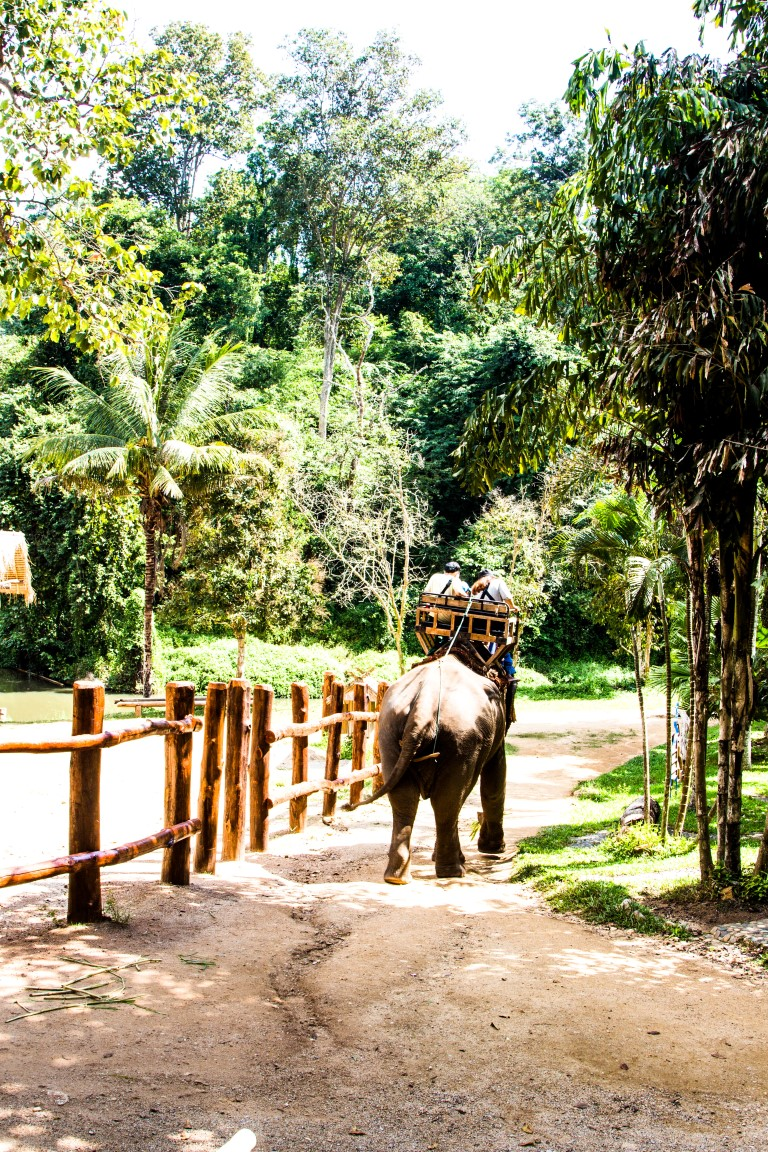 Thai-Elephant-Conservation-Center-Lampang-Elefantendorf-Thailand-24