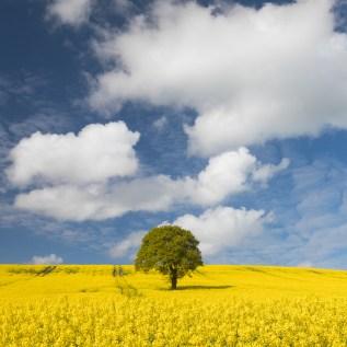wheatley (polariser)