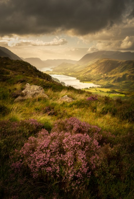 Buttermere Bloom LPOTY FINAL