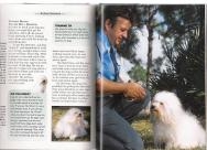 Havanese dog book picture