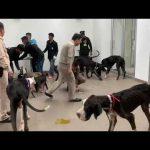 ในหลวงมีพระราชกระแสให้นำ13 สุนัขเกรตเดนไปรับการรักษาที่ รพ.สัตว์คณะสัตวแพทย์ฯ มก.