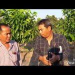 ทำไม้ขุดล้อมตั้งราคาได้เอง อาชีพทำเงินของเกษตรกรปราจีนบุรี (คลิป)