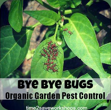 Organic Vegetable Garden Pest Control