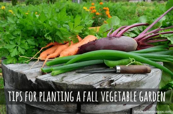 fall vegetalbegardenedited
