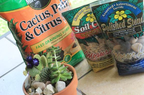 Succulent Supplies