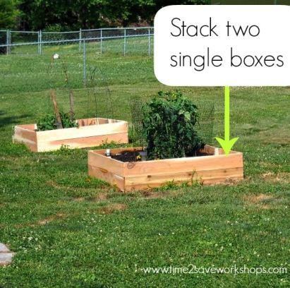 raised-bed-garden-plants
