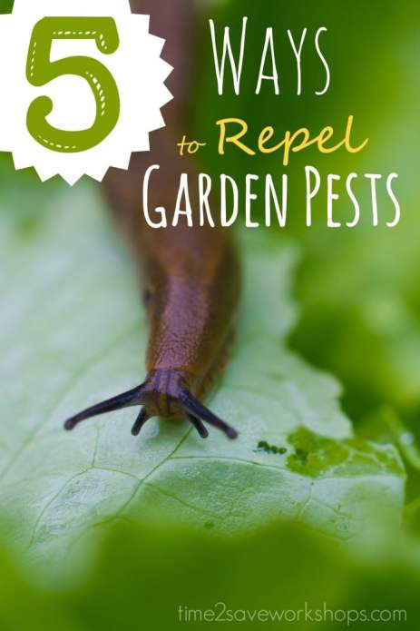 ways to repel vegetable garden insects