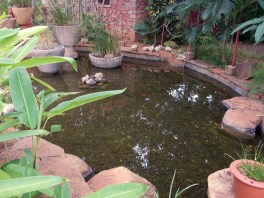 One of the ponds at Taj Kuteeram