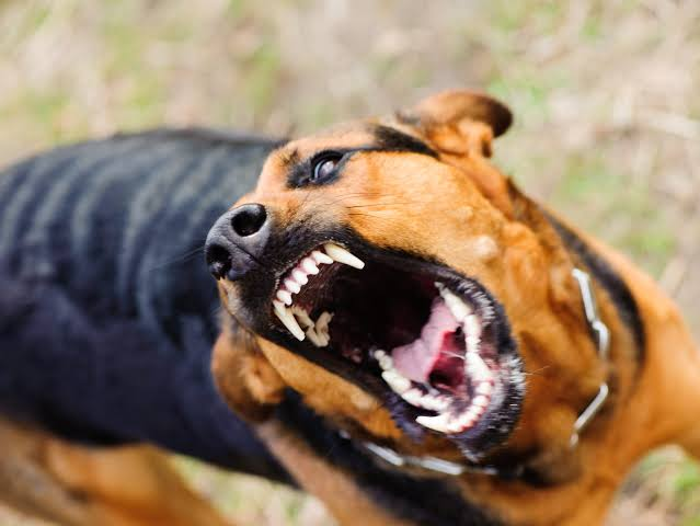 Five people injured in rabid dog attack in South Kashmir