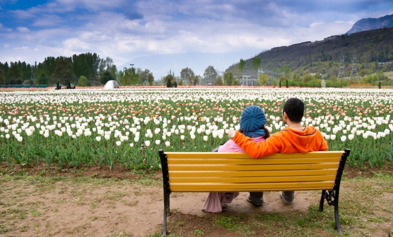 Tulip garden likely to witness early opening in view of rise in temp