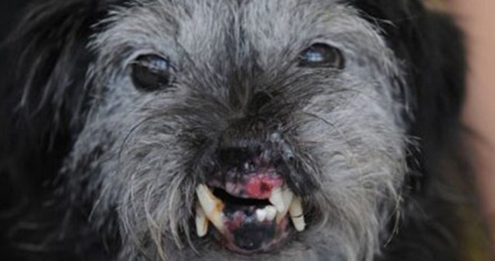 10 Ugliest Dogs of all times in the World