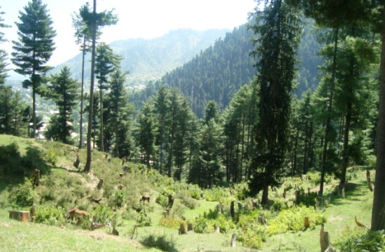 Thinning forest cover in Kashmir - Photo: Shams Irfan