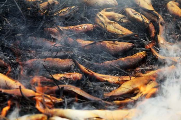 This is how fishes look like after smoking.