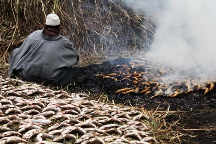 In other parts of the world, the major steps in the preparation of smoked fish are salting (bath or injection of liquid brine or dry salt mixture), cold smoking, cooling, packaging (air/vacuum or modified), and storage. Smoking, one of the oldest preservation methods, combines the effects of salting, drying, heating and smoking.