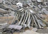 Roopkund-human-skeleton