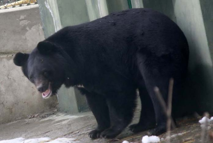 Himalayan Black Bear are visible in the lower reaches from spring to autumn and hibernate in winter.