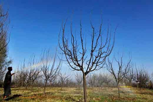 Pesticides-on-apple-trees