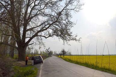 Mustard-Oil-Fields