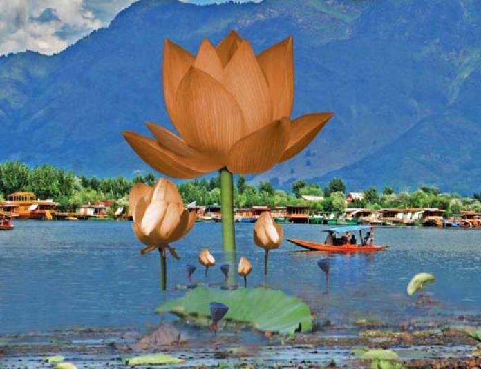 Lotus-In-Kashmir-Cover-Page-Design-by-Malik-Kaisar-Pic-Bilal-Bahadur