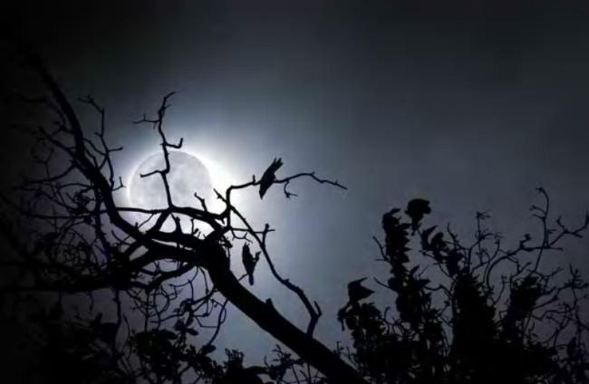 wolf-moon-night-sky
