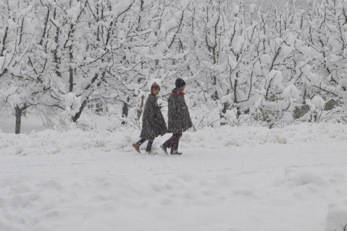 Thursday snowfall has more than one reason to trigger a change in Kashmir. The agrarian class has been eagerly waiting for the dry spell to end. (KL Image: Aakash Hassan)