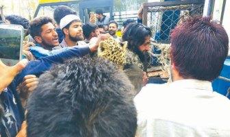 Wildlife In Kashmir Politics Two-leopards-caught-in-Budgam-village kashmir life discourse
