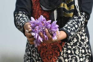 Int'l Outreach Program for Kashmir Saffron Industry Held in NY