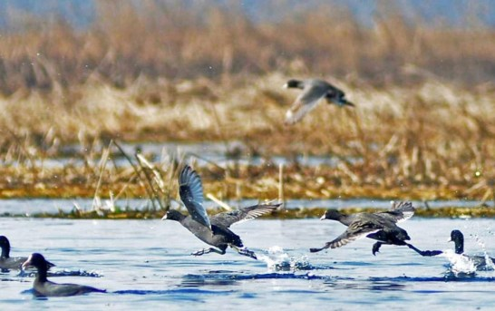 WPD Seeks Assistance To Protect Migratory Birds In JK