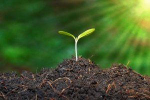 Soil Health Card Boosts Farm Income Up To Rs 30,000/Acre