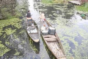 70% Of Srinagar's Sewerage Goes Into Dal Lake,STPs 'Below Par': Experts