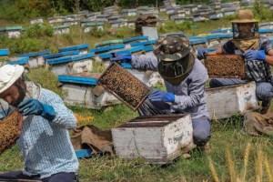Lockdown Cripples Migratory Beekeepers Of Kashmir