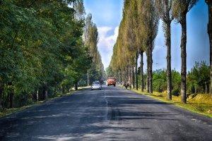 Poplar Felling Draws Mixed Reactions in Kashmir