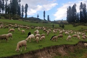 Offer Declined, Govt Not To Sell Pattan Land To Army