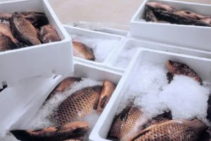 China Says Fish Imports From Indian Firm Suspended As Coronavirus Found