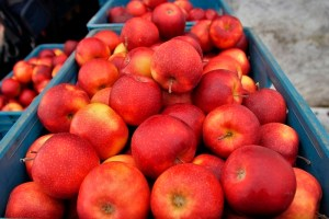 Fruit Growers Demand Import Ban On Iranian Apples