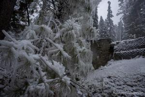 Severe Cold Claims Lives of Siblings in Kulgam