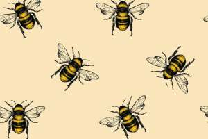 World Bee Day: What Will Happen If Bees Go Extinct?