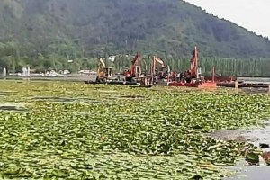 LAWDA Starts Lily Extraction from Dal Lake