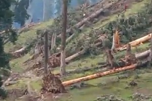 Rs 100 Crore Worth Timber Rots Due To Official 'Apathy'