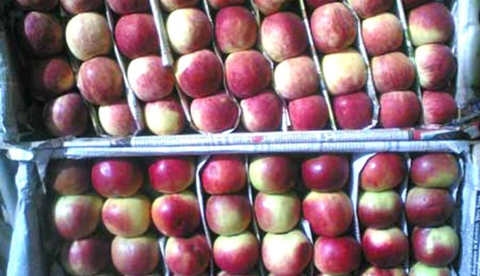 Govt scheme to buy apples when all apples have been sold