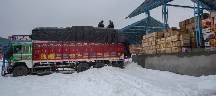 Snowfall aftermath: Apple stored at Shopian mandi damaged