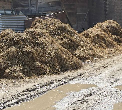 Cow dung on roads pesters Hajin residents