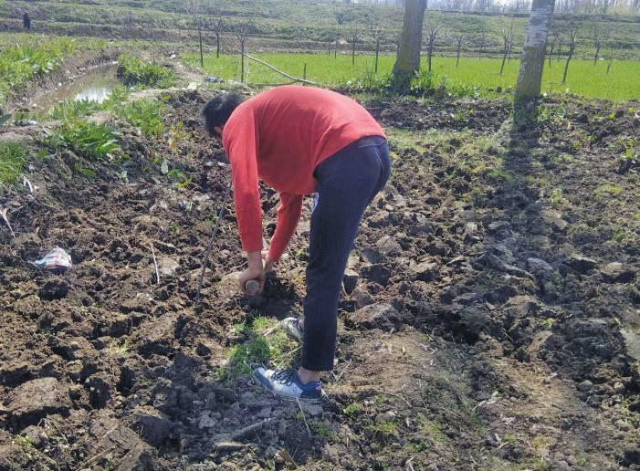 Kashmir's farmers get to work as sowing season begins