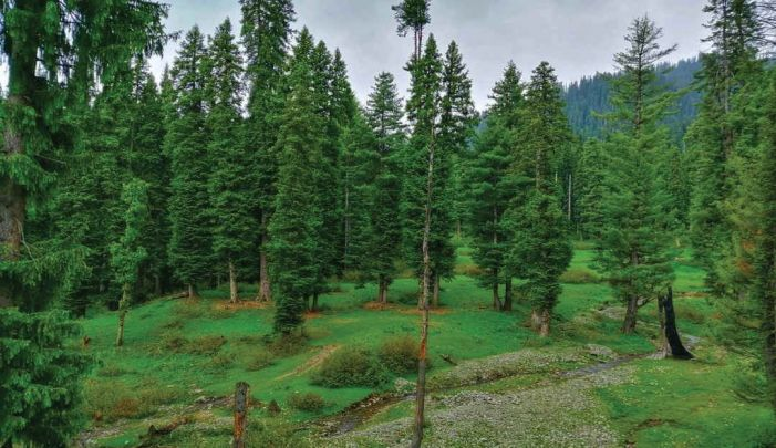 3 Markhors sighted in Hirpora