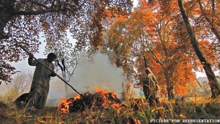The burning of fallen leaves is a conflict between govt and charcoal sellers